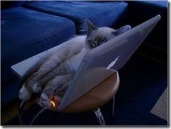 katt_dator
