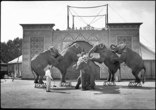 Cirkus Orlando - Strassverger
